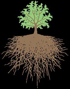 tree-color